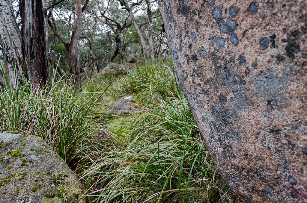 boulders-on-climb-to-mt-langi-ghiran