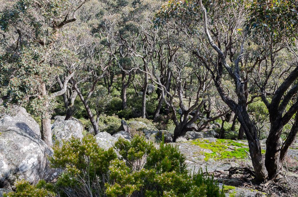 descending-mount-langi-ghiran