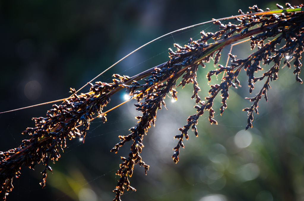 dry-fern-frond