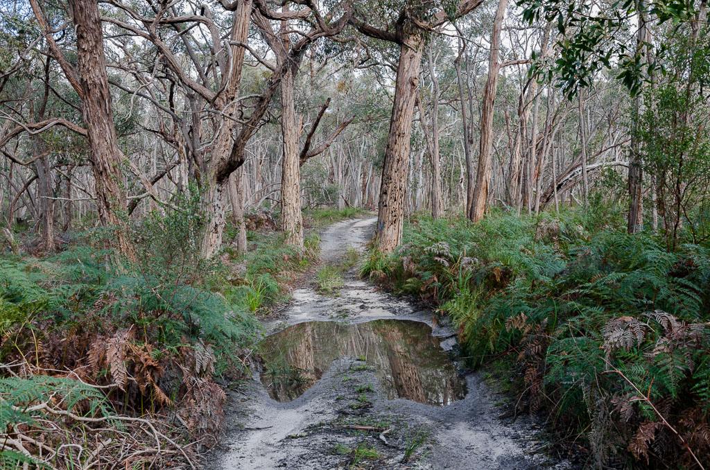 easter-creek-track-langi-ghiran-state-park