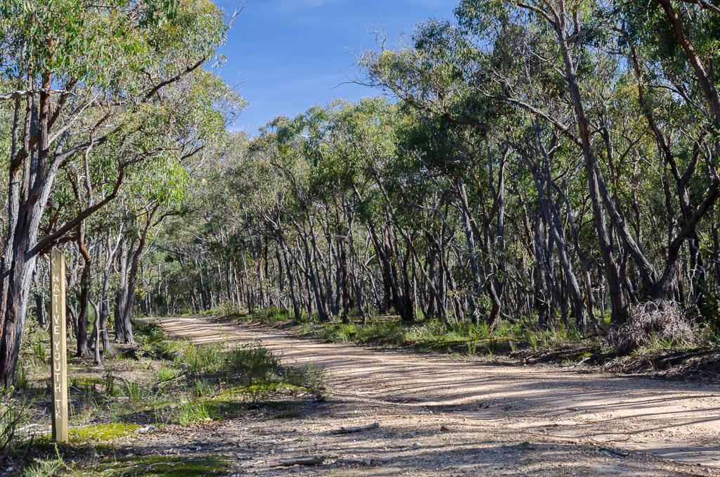 empty-bush-road-steiglitz