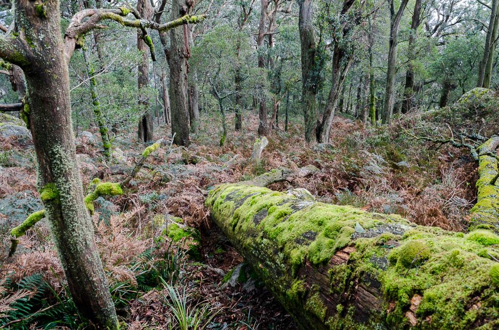 ferns-and-fallen-trees-below-mount-langi-ghiran