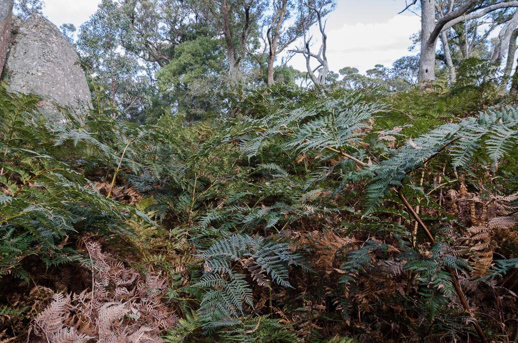 ferns-at-langi-ghiran-state-park