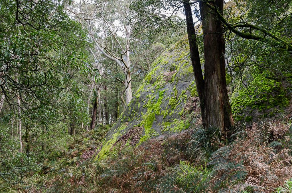 ferns-boulders-langi-ghiran-state-park