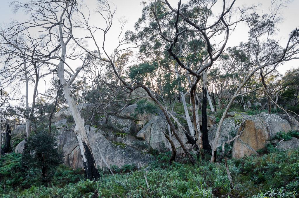 granite-boulders-langi-ghiran-state-park