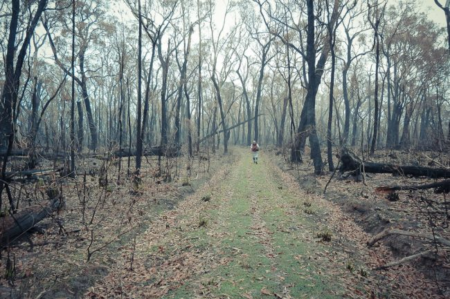heathlands-sign-cobboboonee-forest