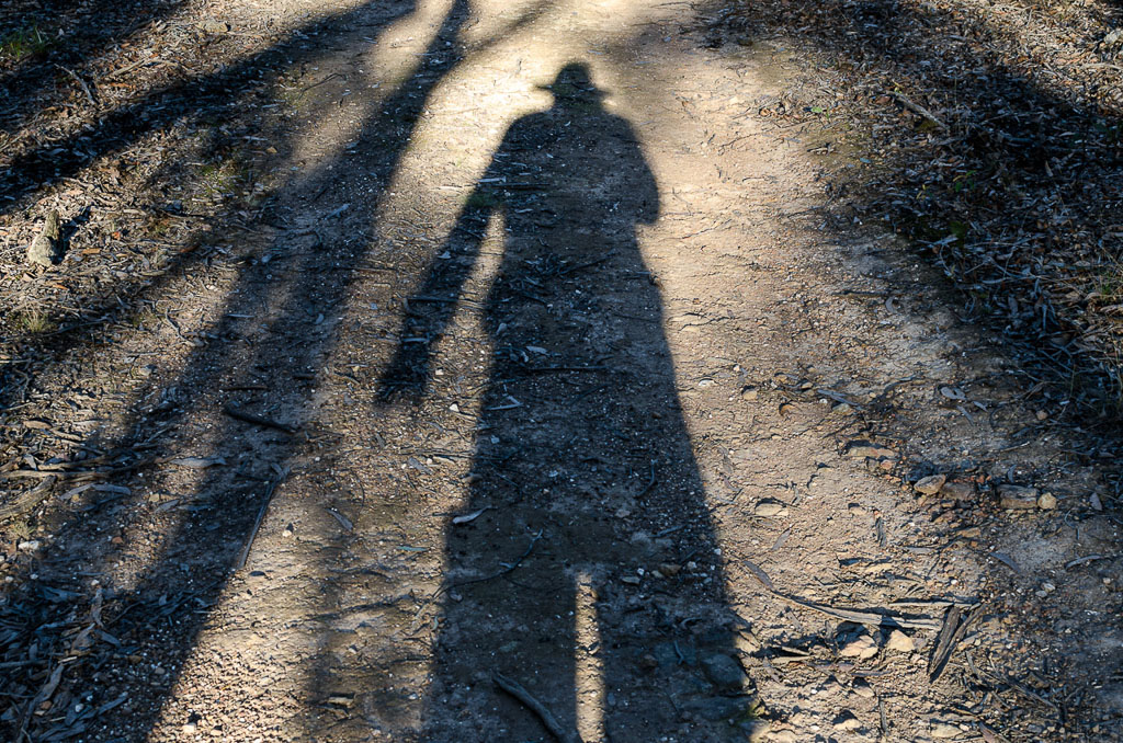 late-afternoon-shadow