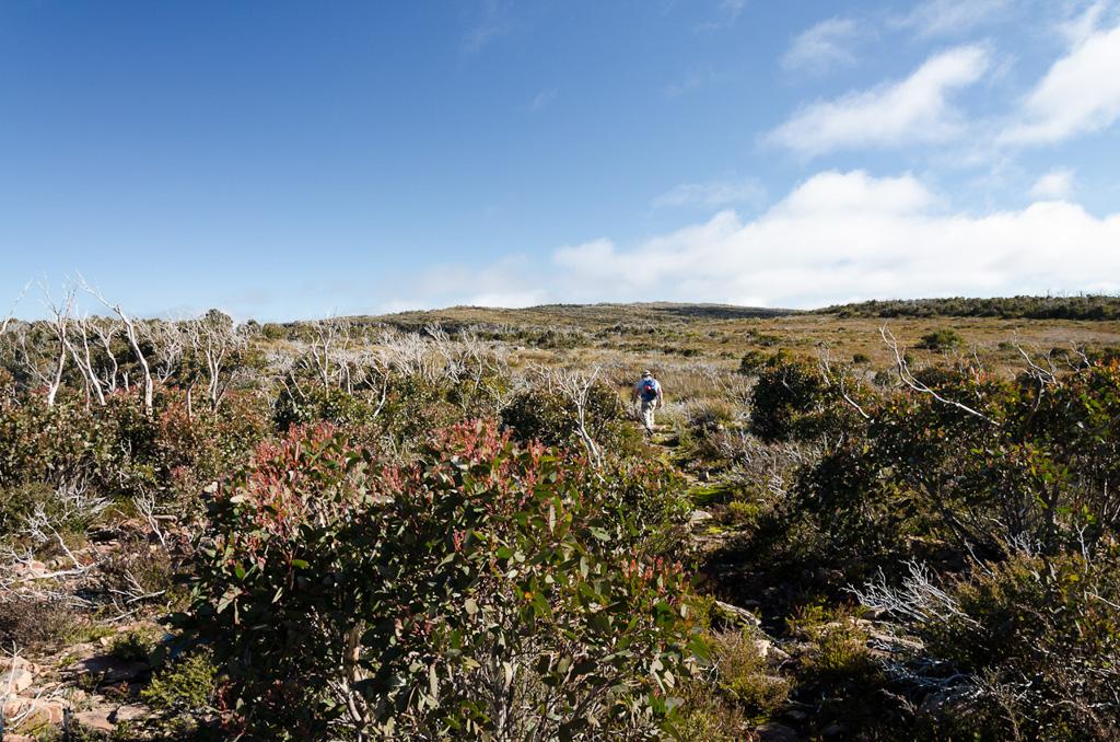 crossing-major-mitchell-plateau