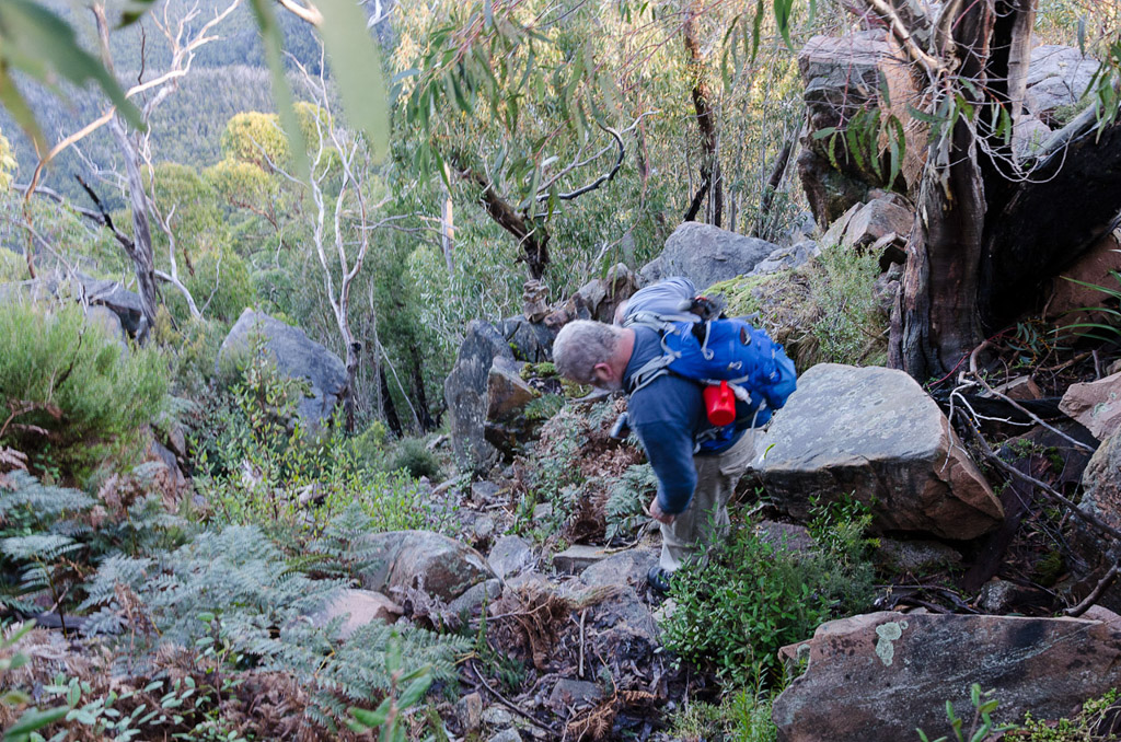 descending-banksia-hill