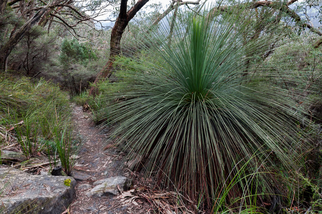grass-tree-mount-abrupt