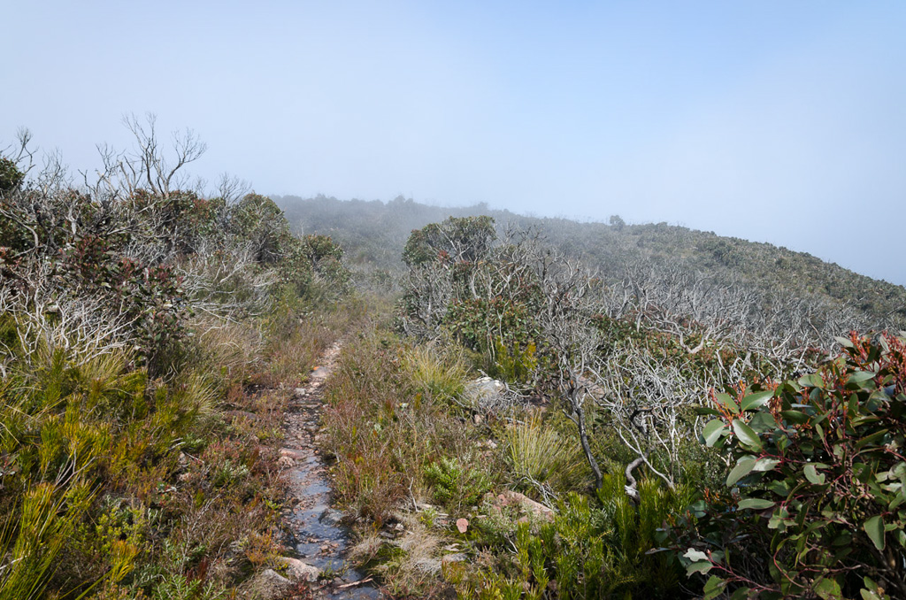 major-mitchell-plateau-track