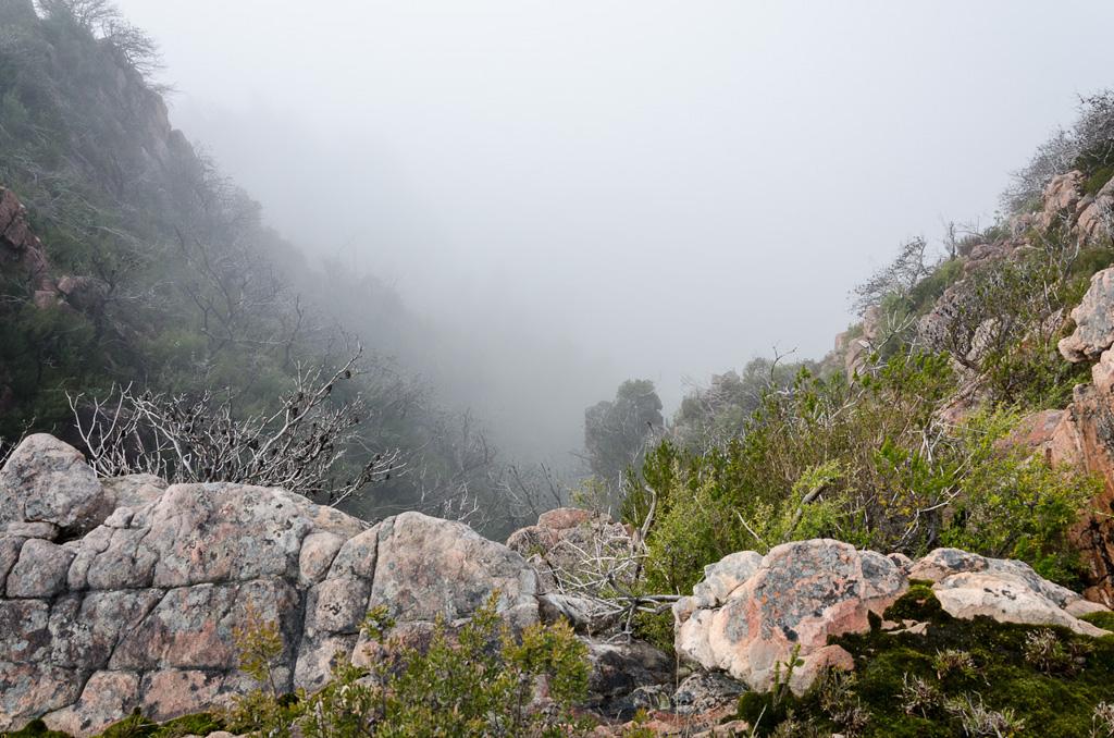 mist-in-valley