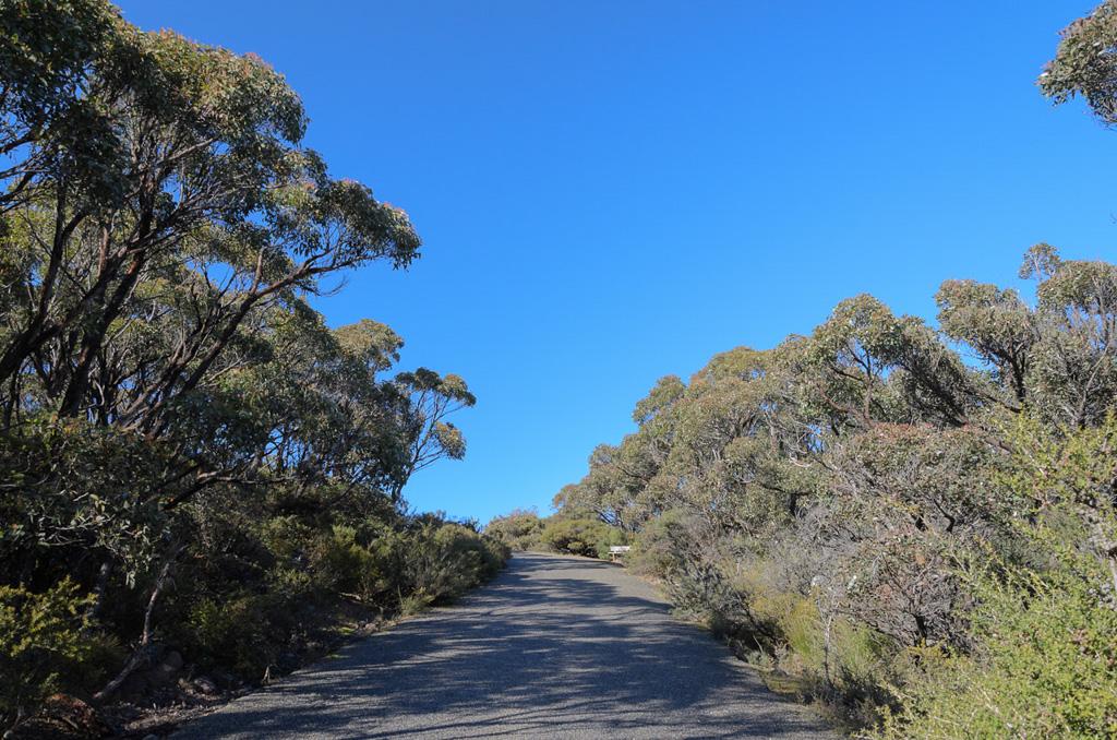 road-mount-william-summit