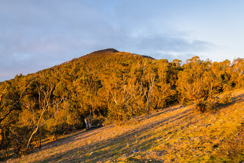 setting-sun-on-banksia-hill