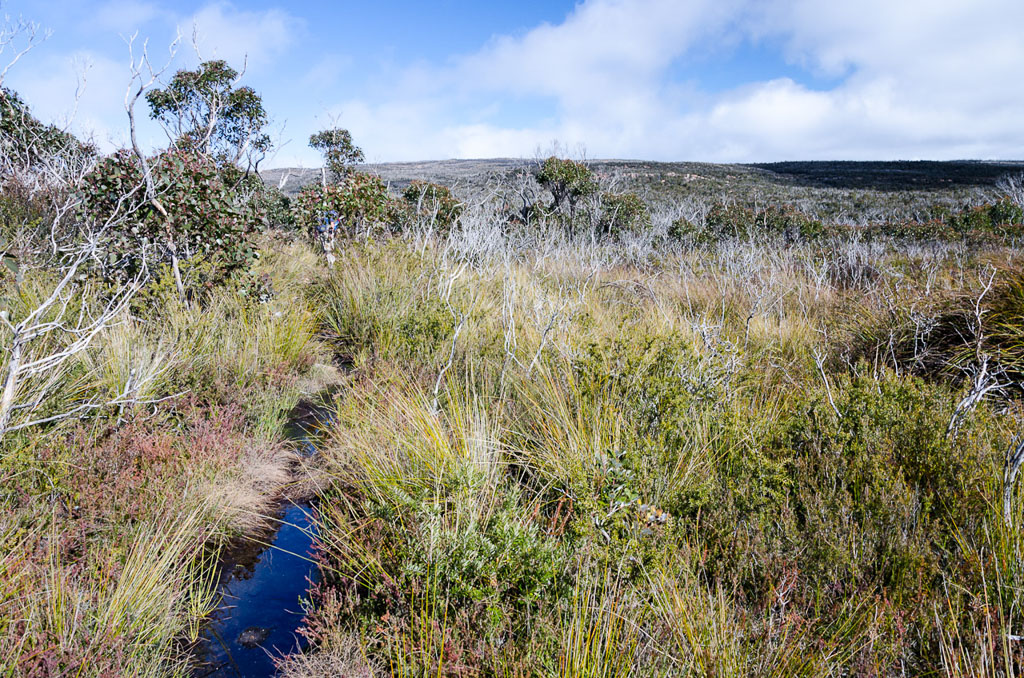 track-on-major-mitchell-plateau