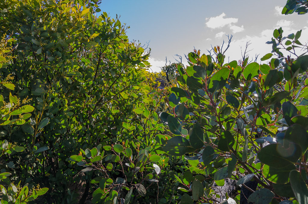 trees-on-major-mitchell-plateau
