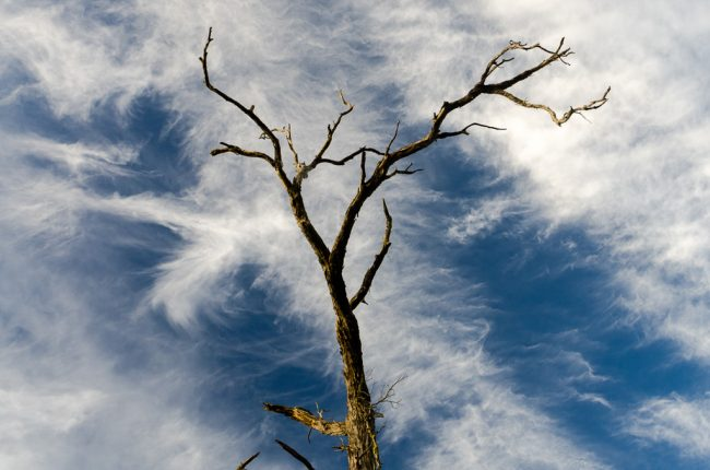 bare-branches-against-sky