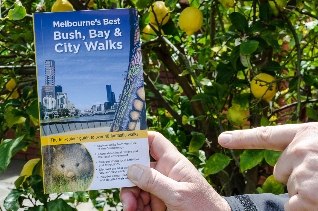 bush-bay-city-walks-julie-mundy
