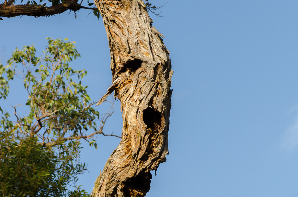 tree-branch-with-face-pareidolia