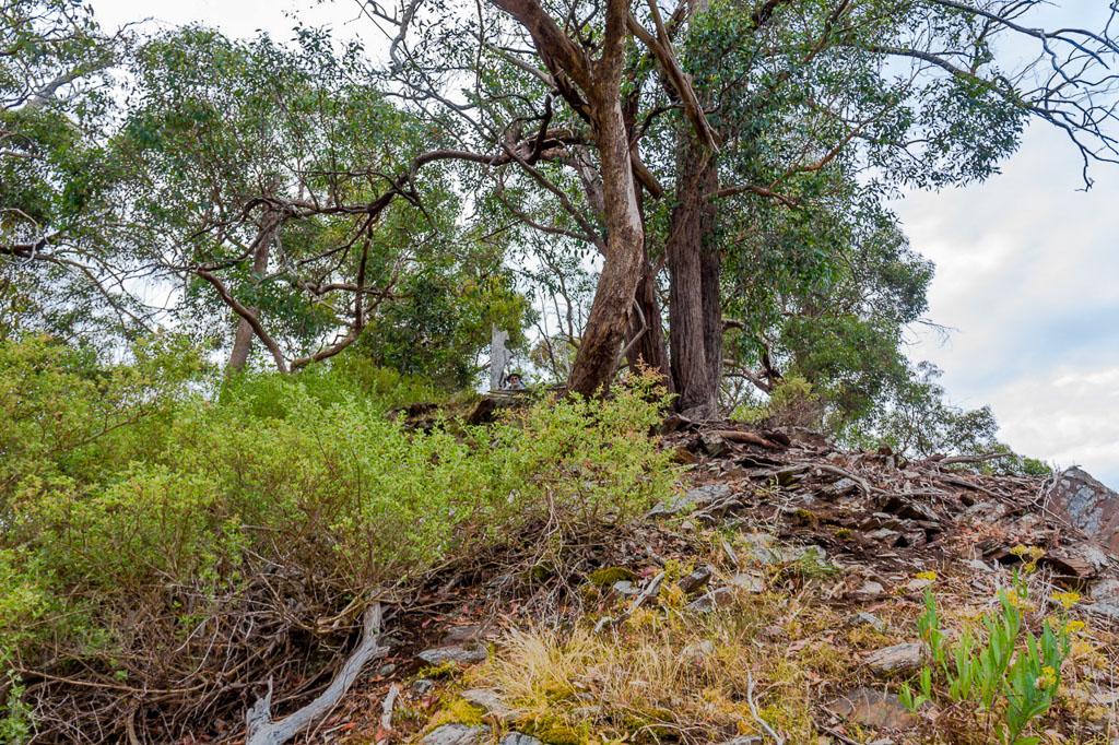 climbing-falcons-spur-werribee-gorge