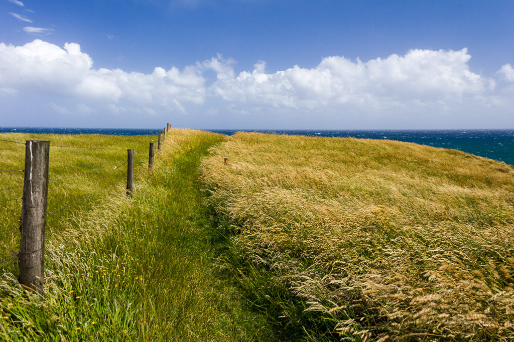 grass-track-george-bass-coastal-walk