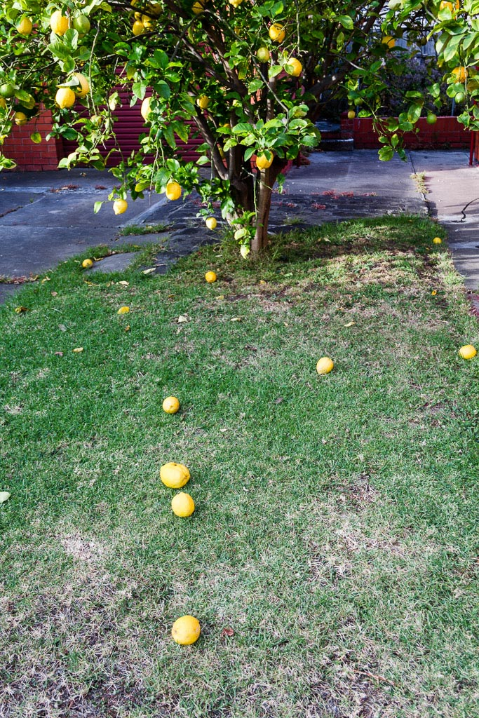 lemons-on-ground
