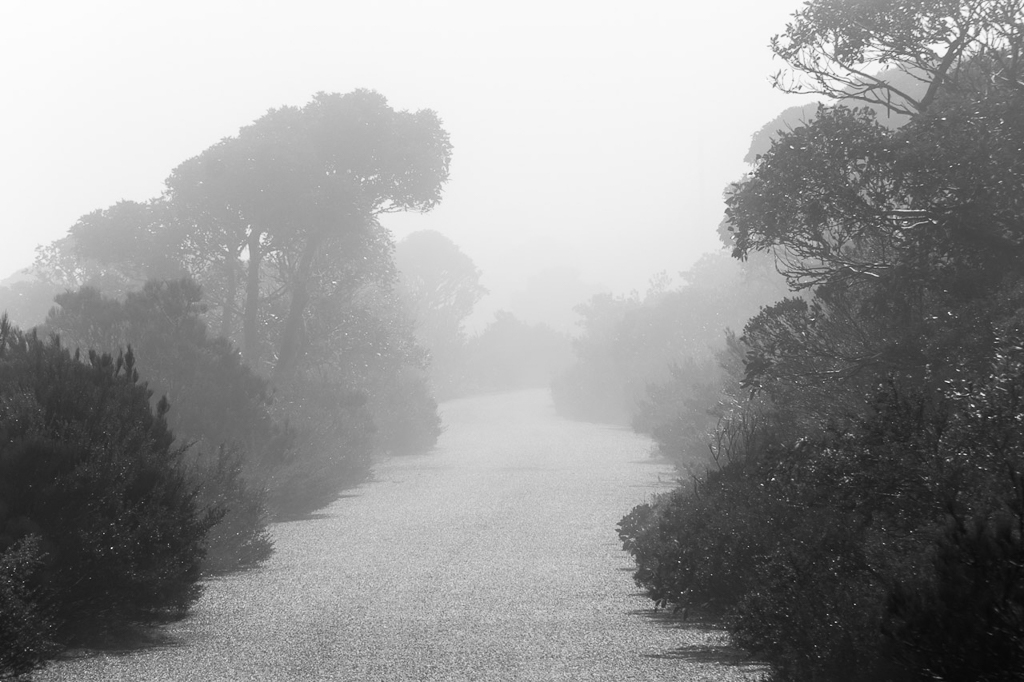 low-cloud-road-to-mount-william