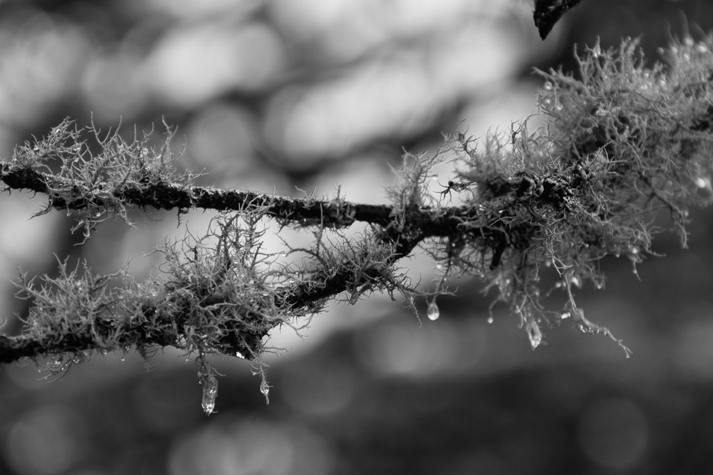 water-drips-on-tree-fern