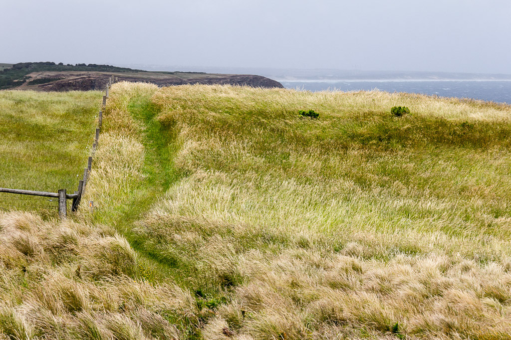 windblown-grass-george-bass-coastal-walk