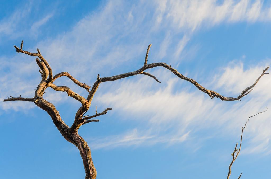 branch-sun-glow