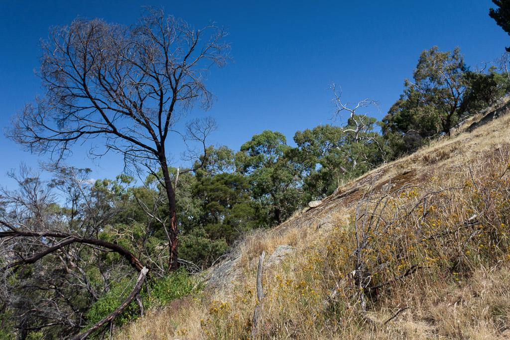 descent-southern-ridge-saddle-mount-beckworth
