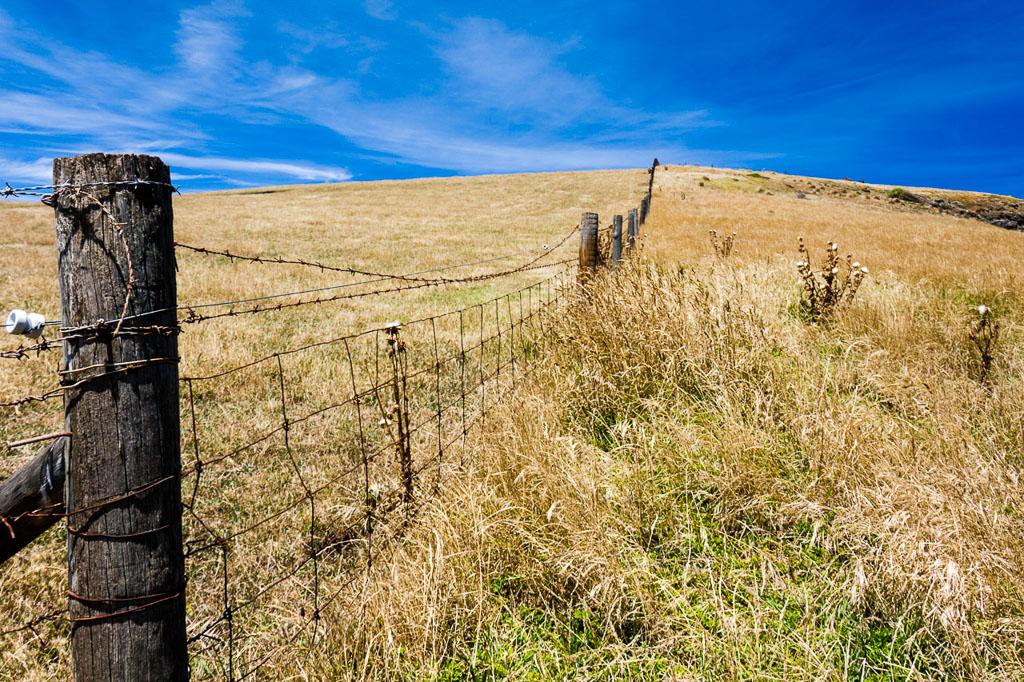 fenceline-helens-head-phillip-island