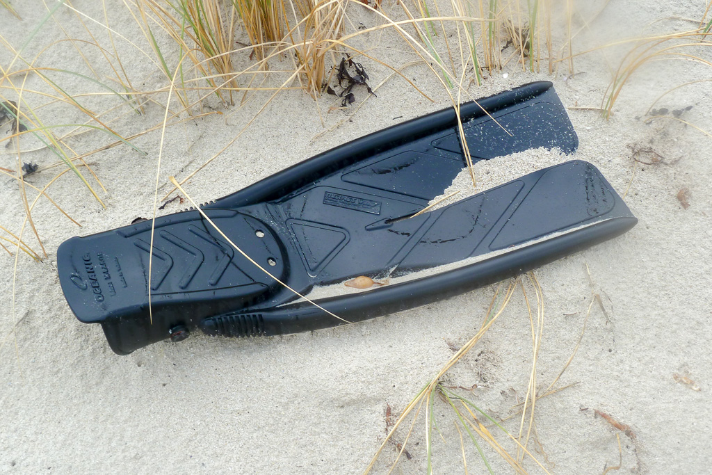 flipper-lying-on-beach