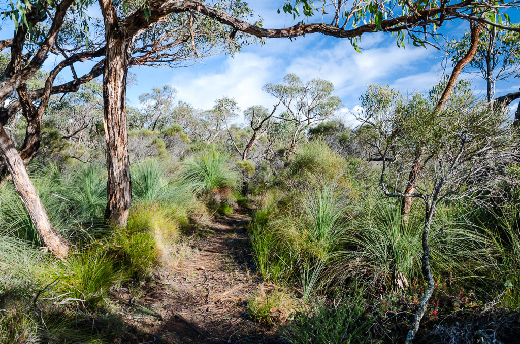 grass-trees-great-south-west-walk-track