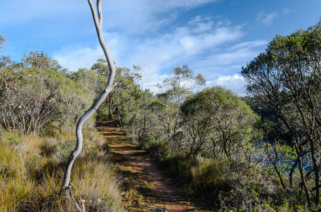 great-south-west-walk-track
