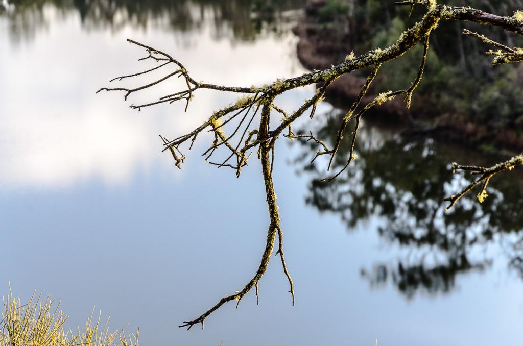 moss-on-branch