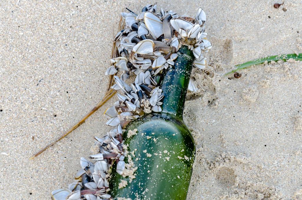 mussels-on-bottle