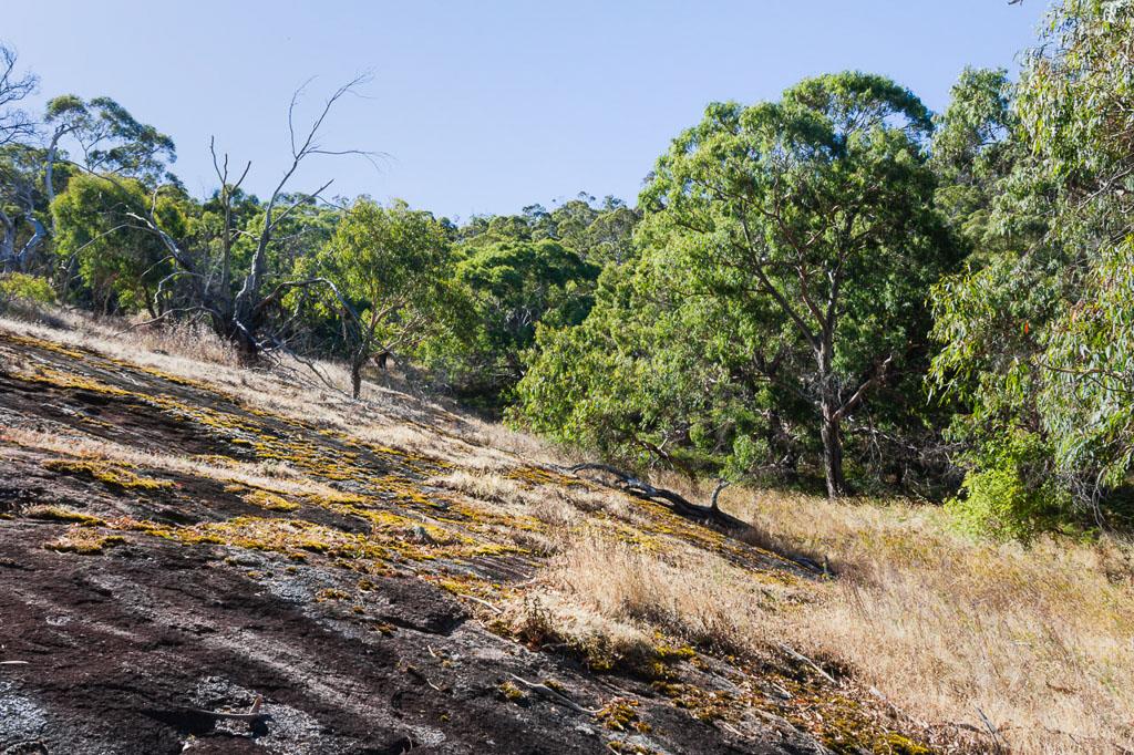 rocks-manna-gum-track--mount-beckworth