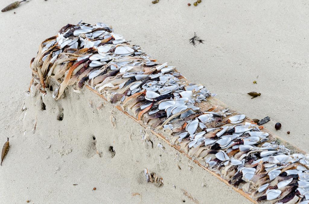 shellfish-on-timber