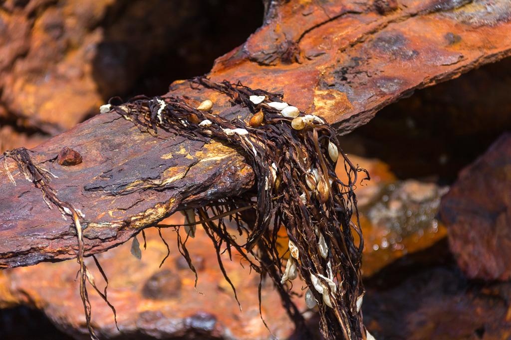 speke-shipwreck-seaweed