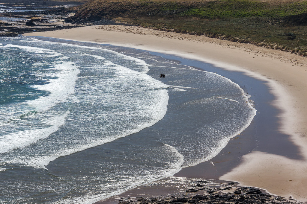 thorny-beach