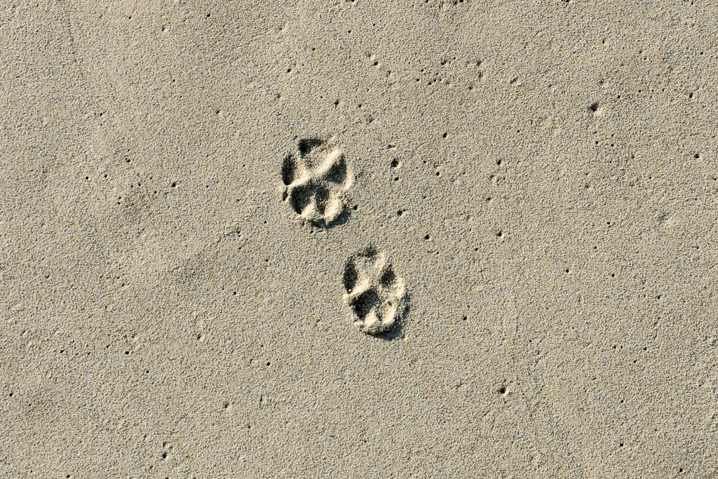 paw-prints-in-sand