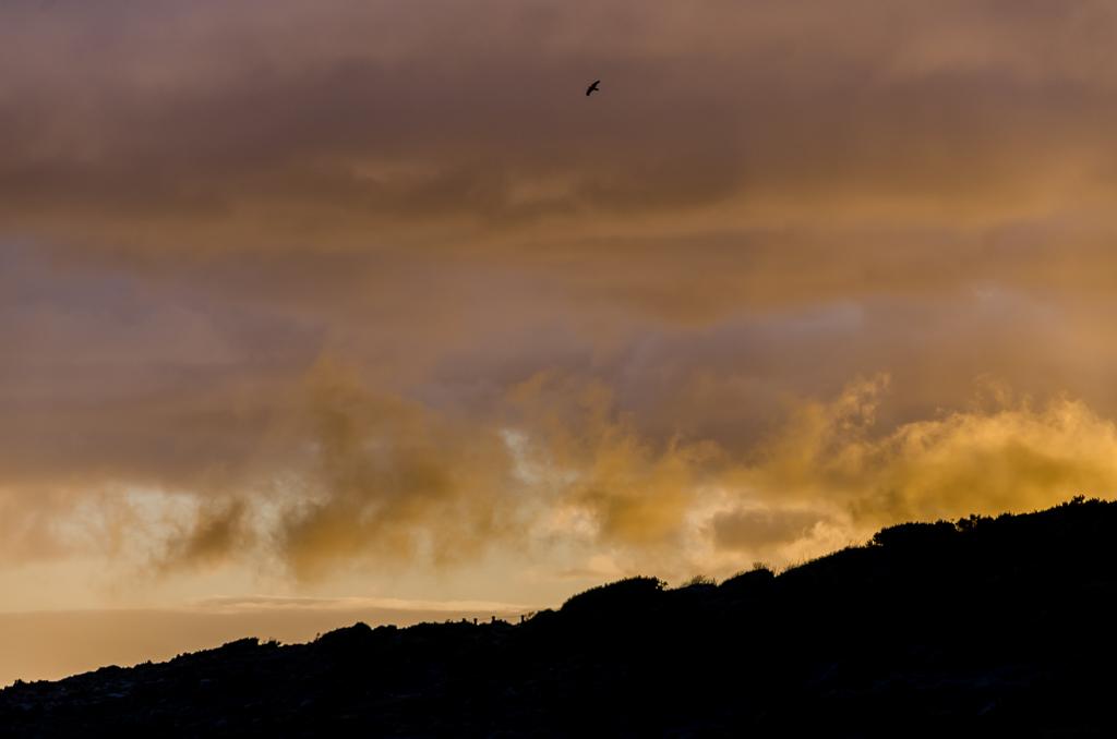 bird-over-ocean-red-sky