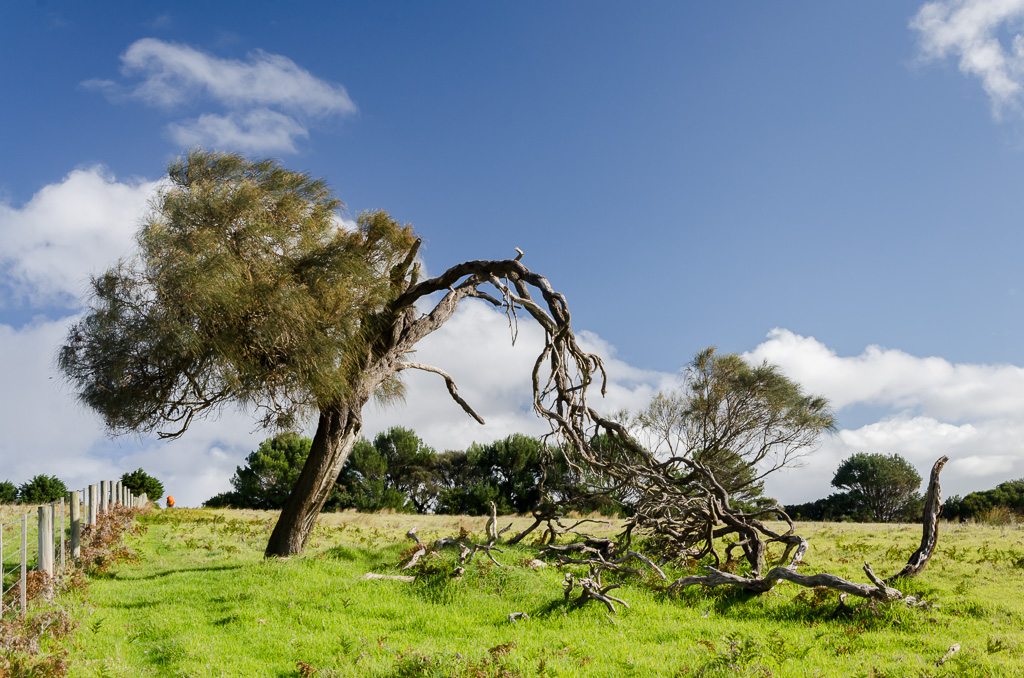 tree-with-fallen-branch