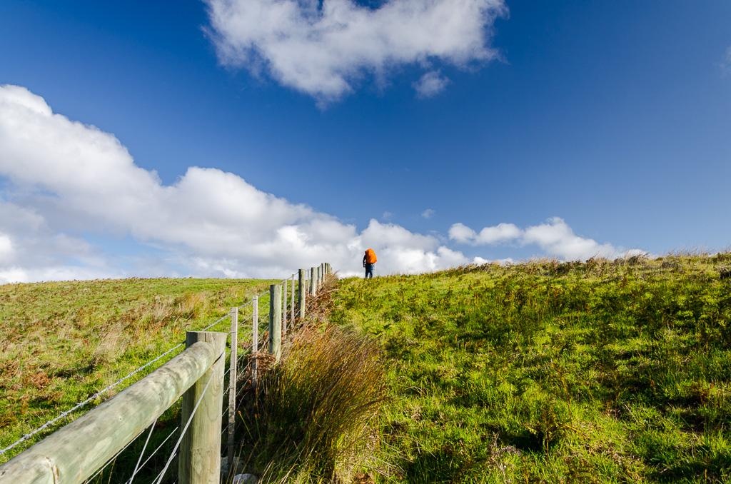 walking-paddock-towards-bridgewater