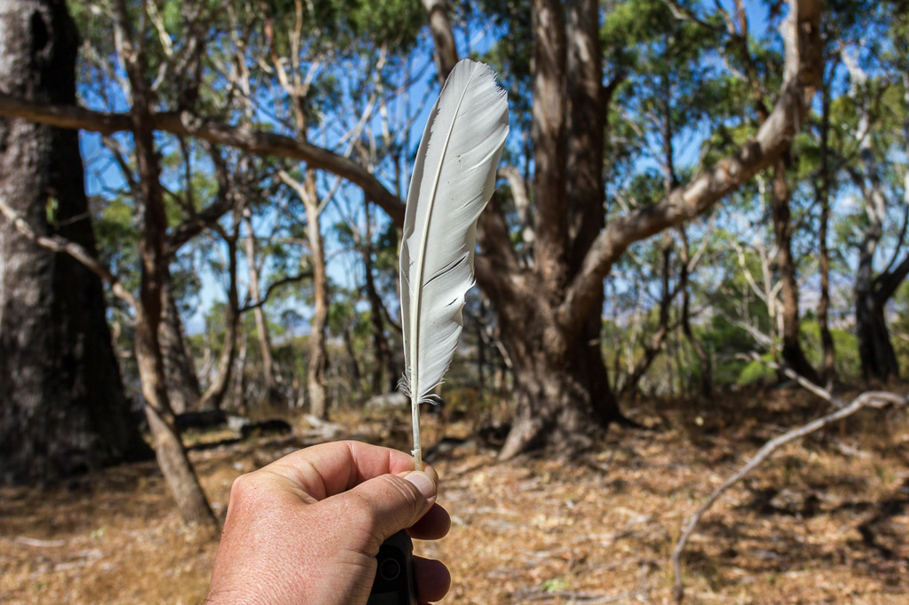 holding-cockatoo-feather