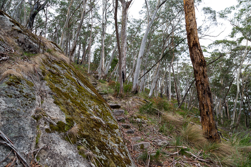 rocks-track-mount-sugarloaf-beeripmo-walk