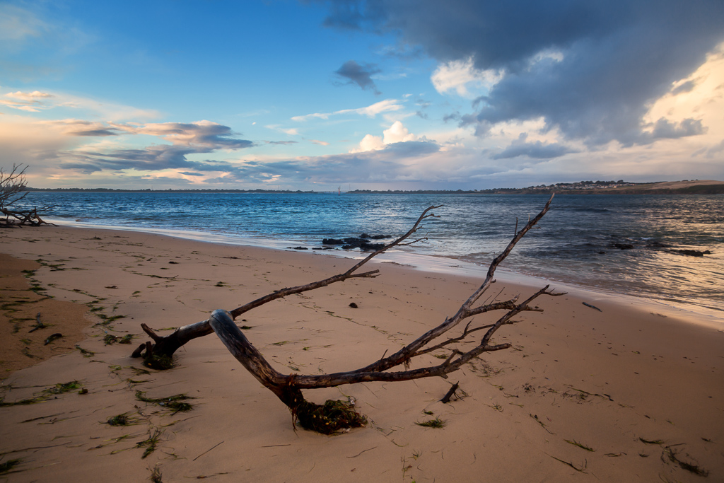 tree-on-beach-phillip-island