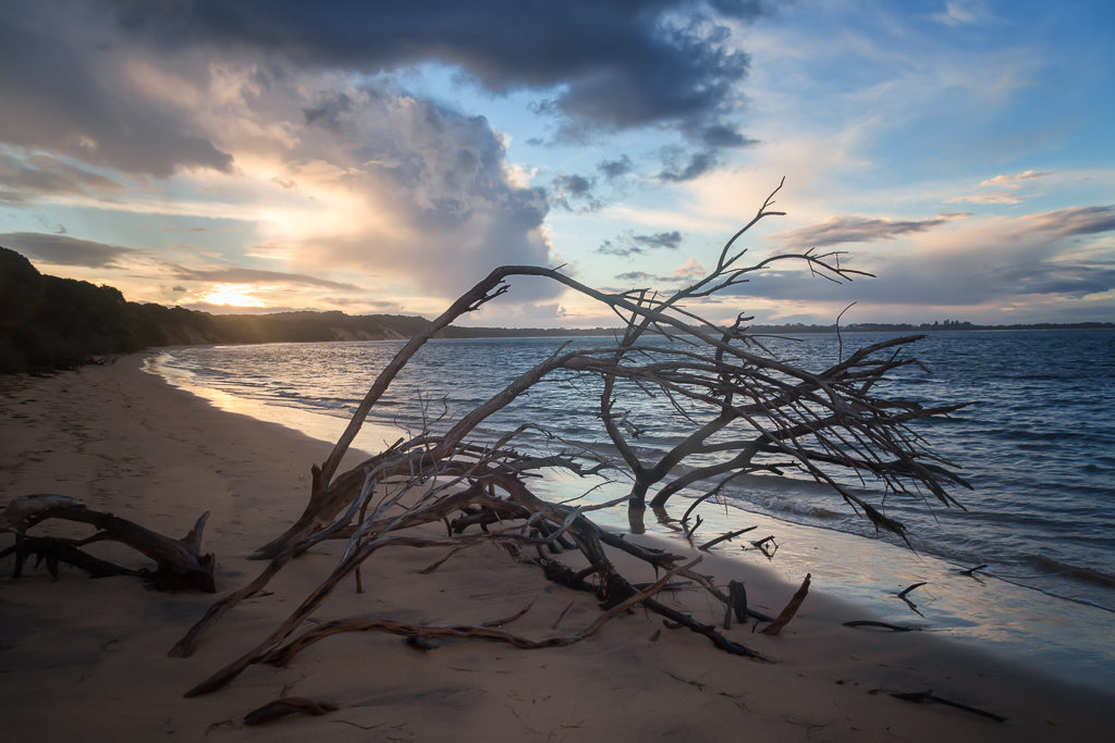 tree-on-beach-sunset-phillip-island