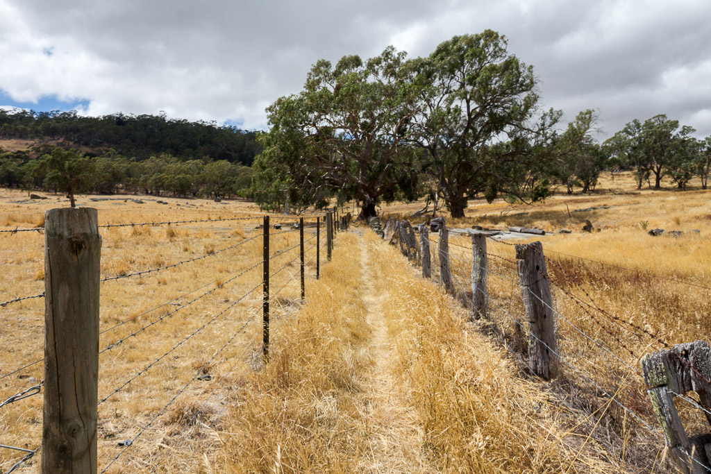 walking-track-from-mcquillans-road